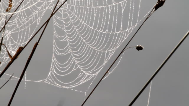 dew-spangled spider's web washed by reflected river light hd video - spider web stock videos & royalty-free footage
