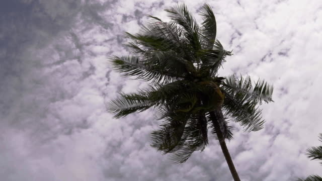 vídeos de stock e filmes b-roll de two clips of wind in coconut palm tree wide angle then close-up - monção