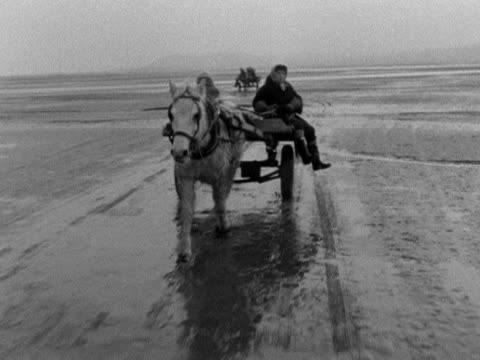 two cockle gatherers ride a horse drawn cart across penclawdd beach 1959 - mollusc stock videos & royalty-free footage