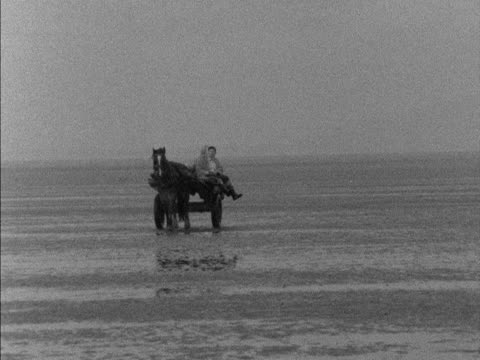 two cockle gatherers ride a horse drawn cart across penclawdd beach 1959 - mollusk stock videos & royalty-free footage
