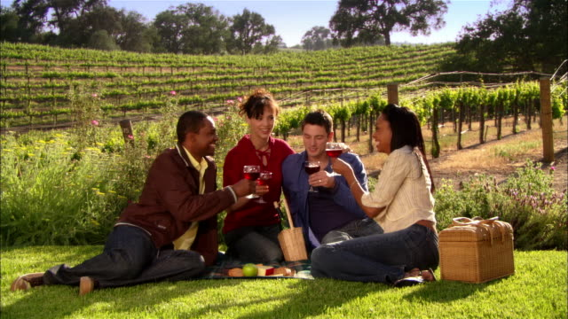 ws two couples drinking wine and toasting on picnic blanket in vineyard / paso robles, california, usa - picnic stock videos and b-roll footage