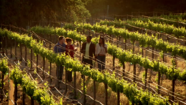 WS Two couples walking through vineyard in rural wine country / Paso Robles, California, USA