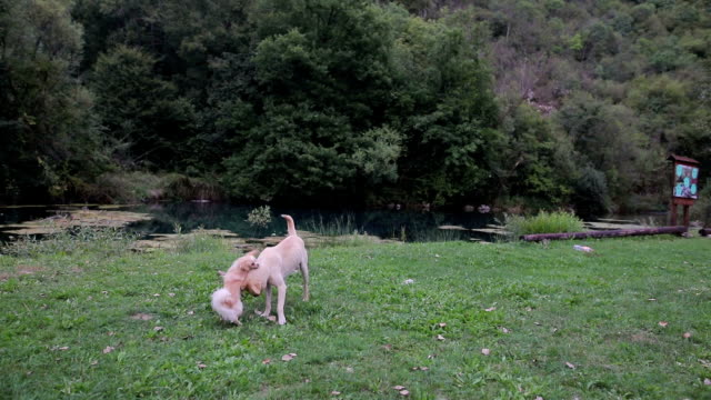 Two cute dogs playing outdoors