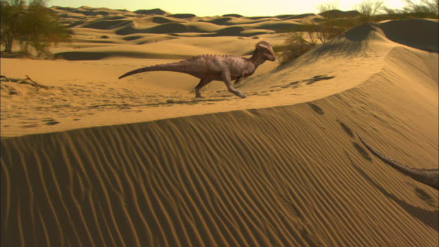 cgi, ms, pan, two dinosaurs on sand dune - track imprint stock videos and b-roll footage