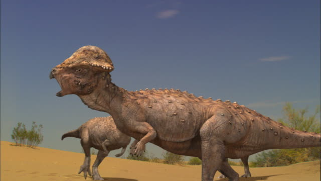 cgi, ms, two dinosaurs on sand dune - paleozoology stock videos and b-roll footage