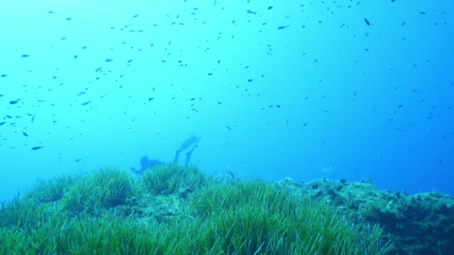 two divers diving near a school of fish - aqualung diving equipment stock videos & royalty-free footage