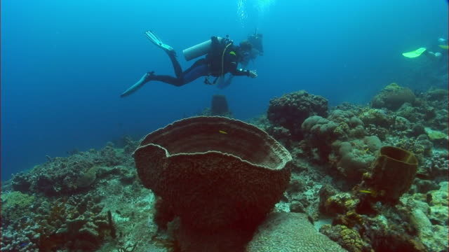 WS, MS, Two divers moving around sponges on reef, Saint Lucia