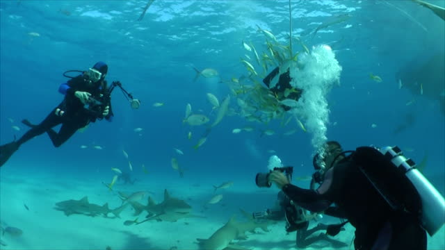 two divers photographed with a gray reef sharks - grey reef shark stock videos & royalty-free footage