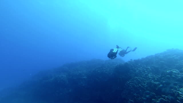 two divers - scuba diving stock videos & royalty-free footage