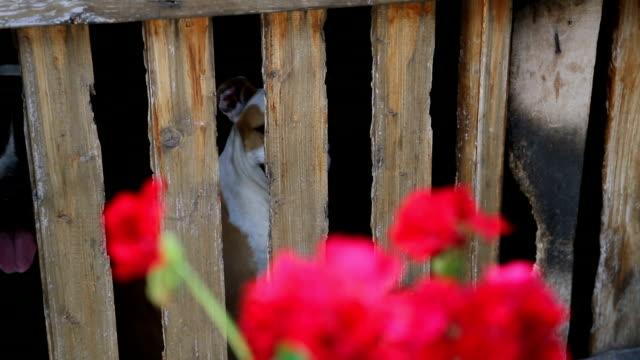 Twee honden in een houten kooi