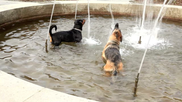 two dogs in the fountain. - fountain stock videos & royalty-free footage