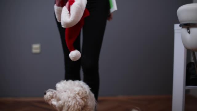zwei hunde springen - weihnachtsmütze stock-videos und b-roll-filmmaterial