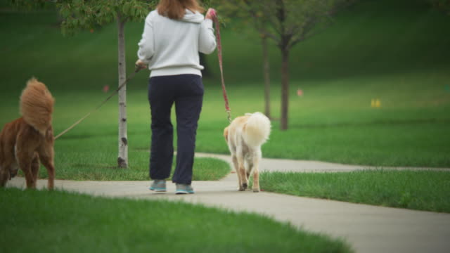 two dogs on a leash walk away from camera in a park. - guinzaglio per animale video stock e b–roll