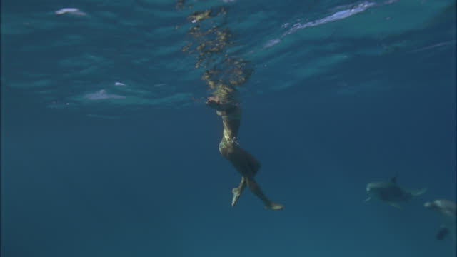 SLO MO WS Two dolphins jumping over woman floating in sea / Moorea, Tahiti, French Polynesia