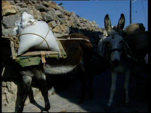 vidéos et rushes de two donkeys carrying sacks of corn through narrow cobbled streets of patmos - baudet