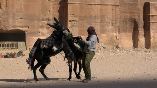 vídeos y material grabado en eventos de stock de two donkeys playing in petra, jordan - animales de trabajo
