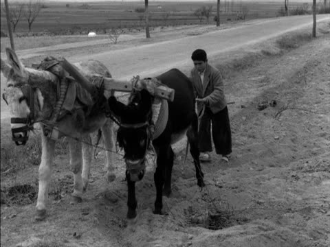 two donkeys pull a wooden plough across a field - the spanish donkey stock videos & royalty-free footage