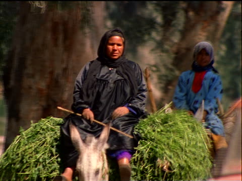 two egyptian women riding plant-laden donkeys on tree-lined road toward camera / cairo/giza / egypt - working animals stock videos & royalty-free footage