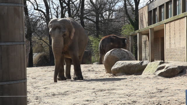 WS Two elephants standing in zoo, Berlin, Germany