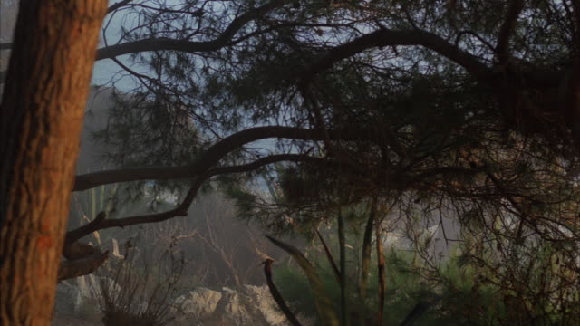 WS PAN Two elephants (Loxodonta) walking along lake, trees and shrubs in foreground