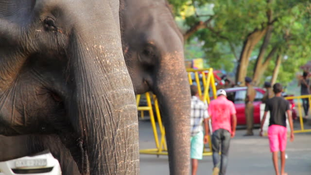 ms two elephants watching passers by on streets / kandy, central province, sri lanka - sri lanka people stock videos & royalty-free footage