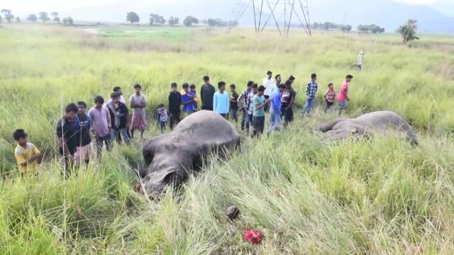 Two elephants were killed after being struck by a train in the outskirt of Guwahati India