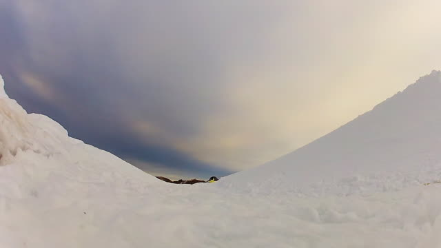 WS LA of two Emperor penguins on snowfield walking and tobogganing up and pass away / Dumont D Urville Station, Antarctica, Antarctica
