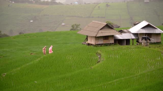 zwei Forscher Wandern zwischen Regen und Reis terrassenförmig angelegten Feld am Berghang