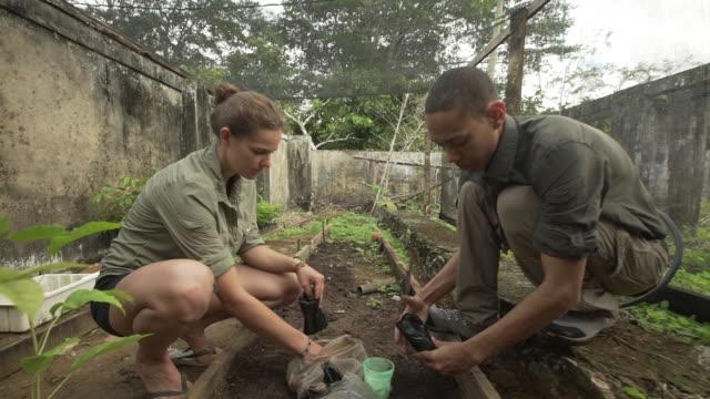 two farm volunteers planting cacao tree saplings - evergreen stock videos & royalty-free footage