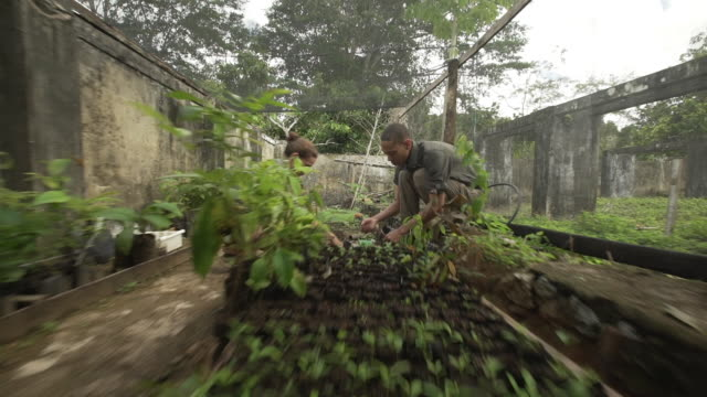 two farm volunteers planting cacao tree saplings - zoom out stock videos & royalty-free footage