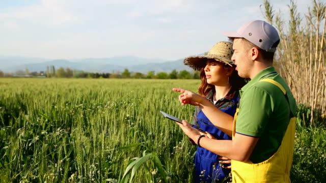 畑に立ってタブレットを見ている2人の農家 - 農学者点の映像素材/bロール
