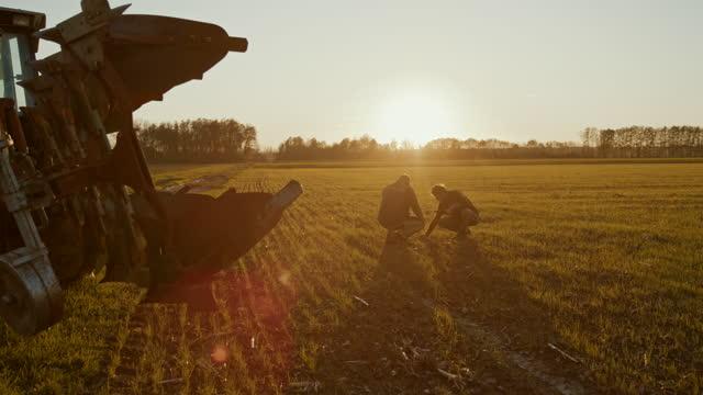 vídeos de stock, filmes e b-roll de slo mo dois agricultores que examinam o crescimento de plantas no campo - ensolarado