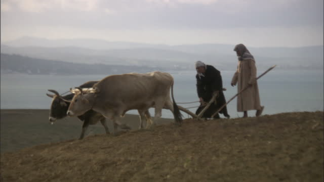 ws pan two farmers in traditional dress and keffiyeh plow  field on hill with two oxen / tunisia - pflug stock-videos und b-roll-filmmaterial