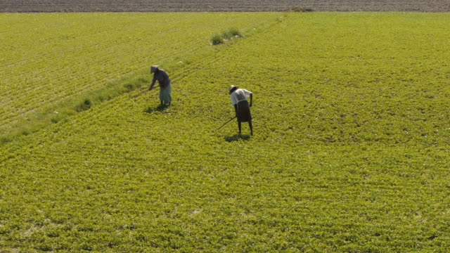two farmers on field in amarapura, myanamar - jäthacke stock-videos und b-roll-filmmaterial