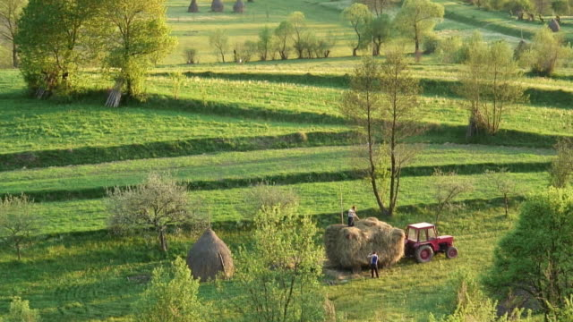 HA WS Two farmers raking hay into bales in green field / Budesti, Calarasi County, Romania