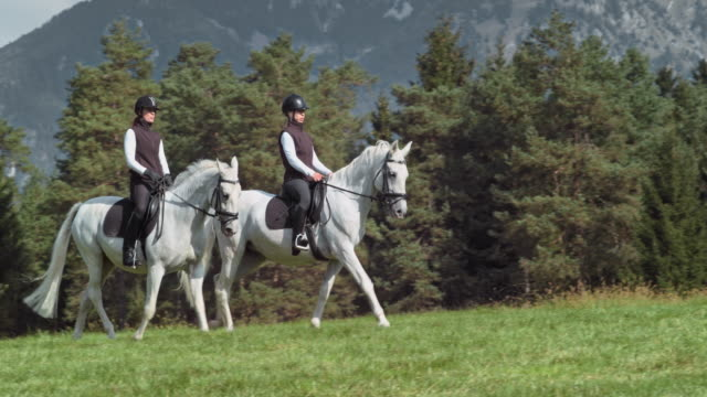 vídeos y material grabado en eventos de stock de dos amigas disfrutando de una cabalgata relajante paseo en la naturaleza - equitación