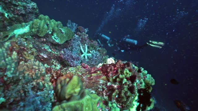 two female scuba divers on coral reef, hin muang, thailand - aqualung diving equipment stock videos & royalty-free footage
