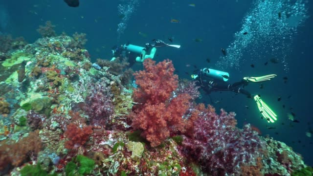 two female scuba divers on coral reef of alcyonarian soft coral, hin daeng, thailand - aqualung diving equipment stock videos & royalty-free footage