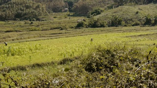 two fieldworker in luang namtha, laos - spoonfilm stock-videos und b-roll-filmmaterial