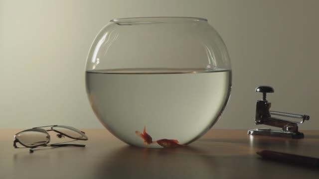 vídeos y material grabado en eventos de stock de two fish swim in a fishbowl - atrapar