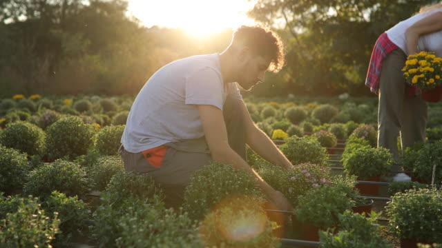 two florists working as team - centro per il giardinaggio video stock e b–roll