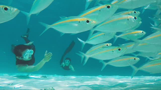 two free divers swimming underwater with school of fish - fish stock videos & royalty-free footage