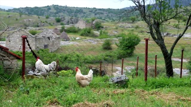 Zwei kostenfreie Hühnchen