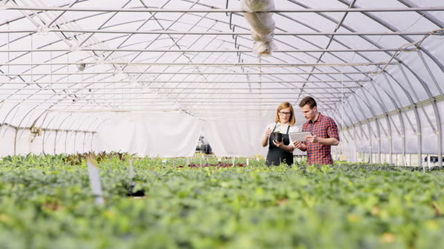 ds ws two gardeners analyzing flower growth in the greenhouse - giardinaggio video stock e b–roll