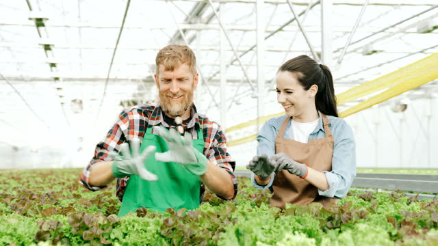 slo mo 温室の中でガーデニング手袋を着用する2人の庭師 - プレイドシャツ点の映像素材/bロール
