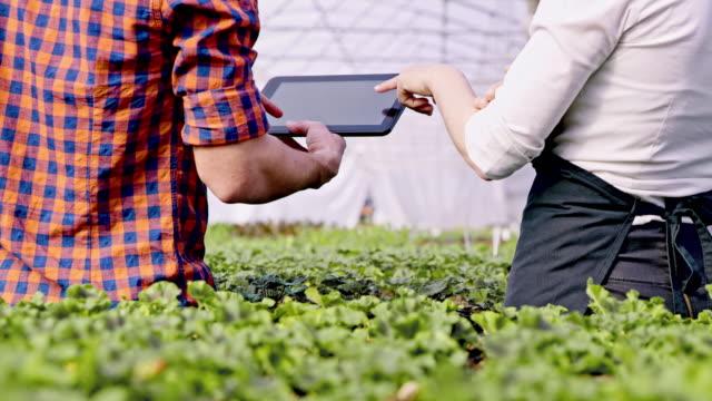 vídeos de stock, filmes e b-roll de ds ms dois jardineiros usando um tablet para analisar o crescimento da flor - processo vegetal