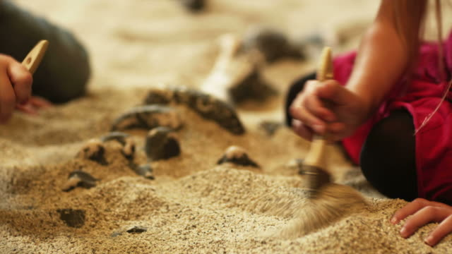 cu tu td two girls (4-5, 6-7) brushing sand from fossils at excavation site in natural history museum, lehi, utah, usa - lehi stock-videos und b-roll-filmmaterial
