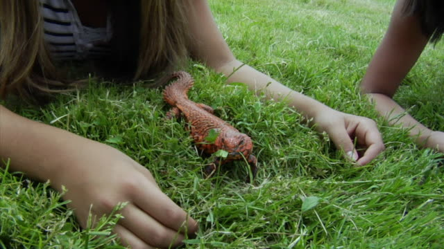 MS, ZI, CU, Two girls observing and feeding lizard on lawn, Richmond, California, USA