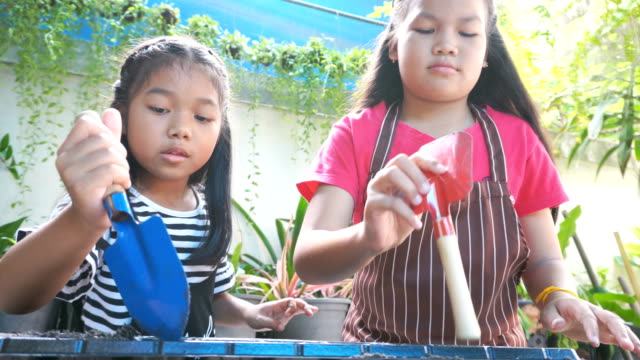 two girls planting vegetables at the home - children only stock videos & royalty-free footage