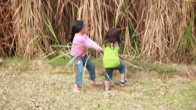 two girls playing in the farms  - sugar cane stock videos & royalty-free footage